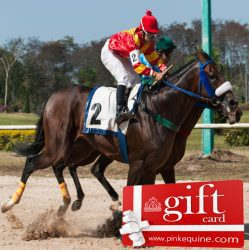 Gift Card Horse Racing